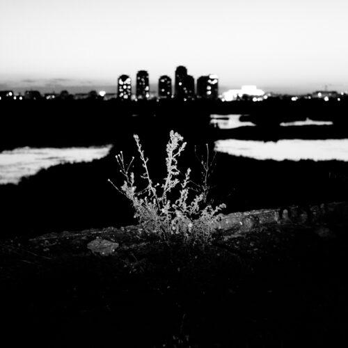 dfgrama Night Creature